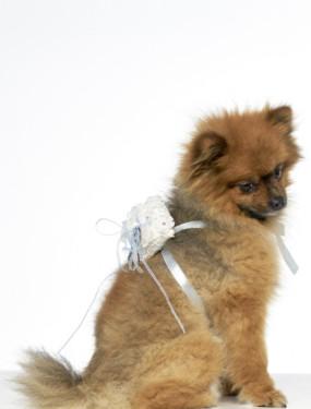 Ringkussen voor de hond